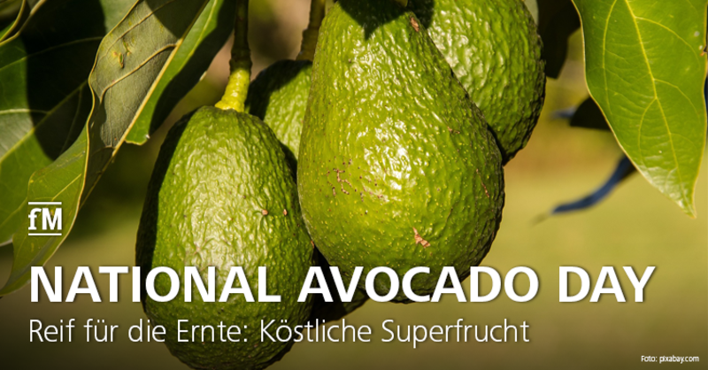Reif für die Ernte: Köstliche Superfrucht Avocado mit zwiespältigem Ruf – zwischen nährstoffreich, lecker und mieser Ökobilanz.