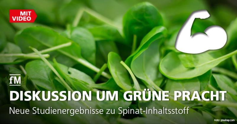 Neue Studienergebnisse zu Spinat-Inhaltsstoff Ecdysteron.