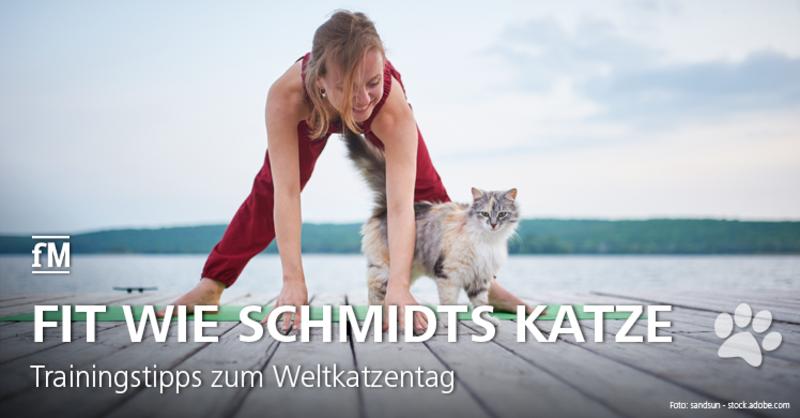 Trainingstipps und Wissenswertes rund um die Katze zum Internationalen Katzentag (International Cat Day).