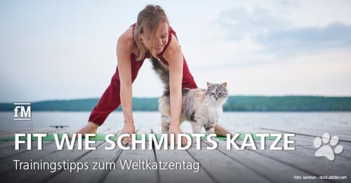 Schmitz katze redewendung