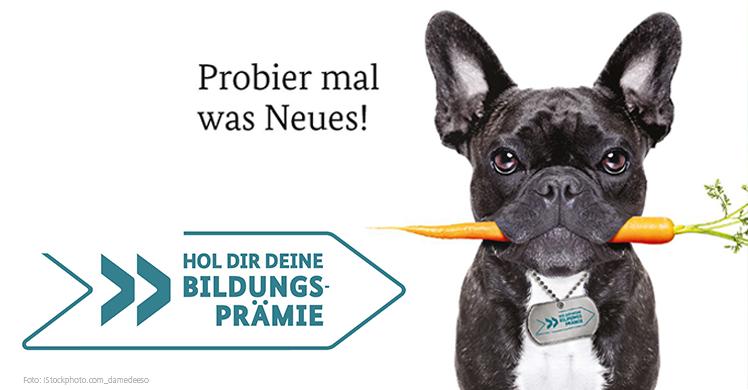 Hund frisst Karotte: ganz nach dem Motto 'probier mal was Neues' jetzt die Bildungsprämie beantragen.