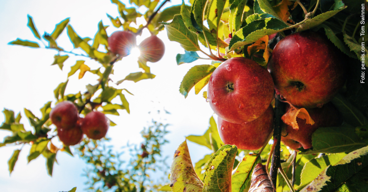Jährlich am dritten September ist Internationaler Iss-einen-Apfel-Tag oder Eat an Apple Day.