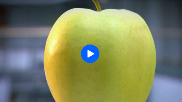 Videobeitrag 'planet wissen': Superfood Apfel – das heimische Obst schützt die Zellen vor freien Radikalen, die durch Umweltgifte, Zigarettenrauch oder Alkohol in den Körper gelangen.