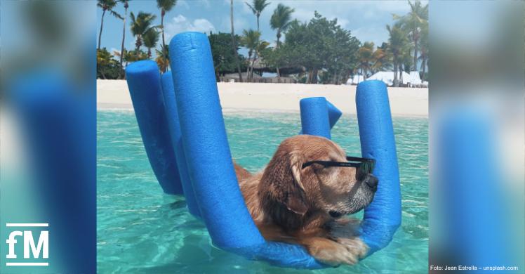 Chill mal: Dieser Hund macht es vor, wie Sie der Superhitze entkommen
